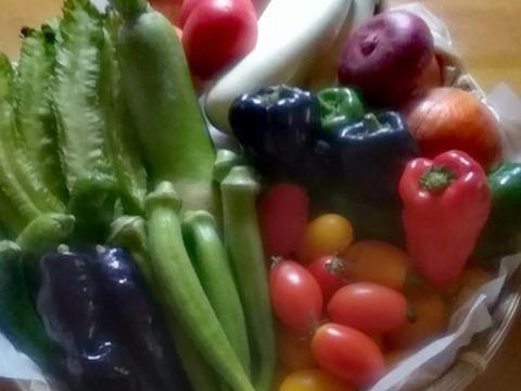 【盛りだくさん屋】*旬の元気!野菜セット*7品目以上~農薬/化学肥料・不使用