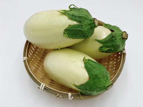 【季節限定】「ふわっとろ」の濃厚な真っ白いナス(10本入)