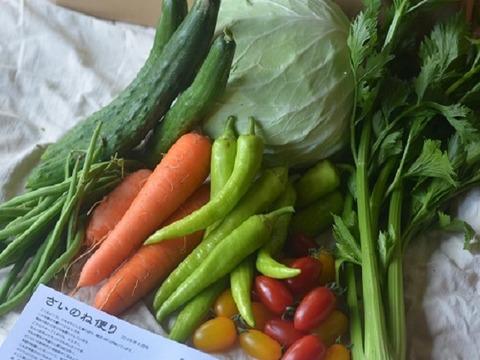 さいのね畑の野菜 共同購入お徳用 18~24パック