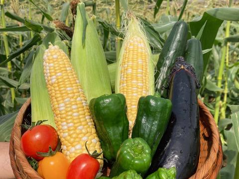 栄養満点✨夏の野菜セット!!《朝採り!!》直売所では毎年売り切れ!!フルーツのような甘さと、食べ飽きない食味!赤峯農園のプレミアムスイートコーン『あま嬢』&簡単便利!!『ドライベジ』入り✨