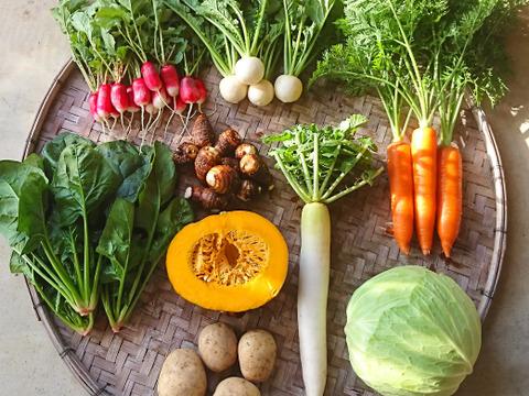 「有機JAS認証」旬の野菜セット S 6~8品