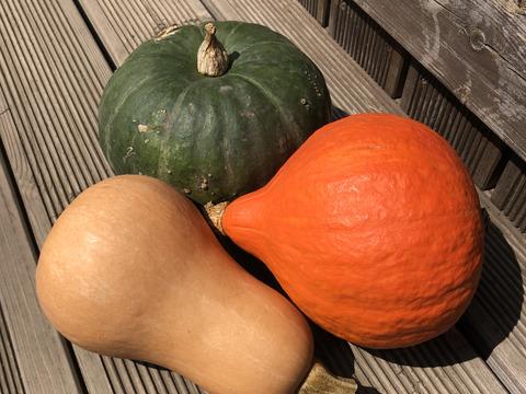 見た目も楽しめる!かぼちゃ詰め合わせセット3種(5〜6個)