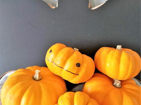 ハロウィン!【有機JAS認証】ジャックビーリトル パンプキン 1.5~1.6kg(約10~12個) 南アルプスの有機野菜
