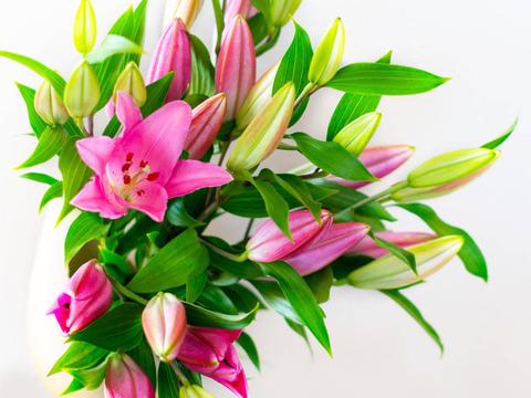 【夏ギフト】お中元!!~Life  with  Lilies~【オリエンタルユリピンク5本束】おうち時間を彩る・・・♥【F・F・HIRAIDEオリジナル熨斗付き】