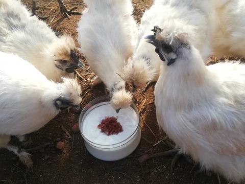 【数量限定】放し飼い烏骨鶏の卵と旬のお野菜4種