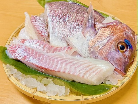 【TVで紹介!】【人気急上昇中☆】天草産 真鯛1尾食べ尽くしセット(冷蔵)【2枚卸し】
