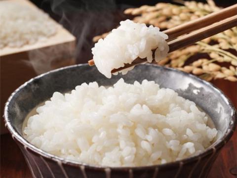 [新米]   こしいぶき  無洗米  5kg  令和三年産
