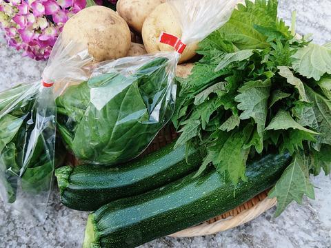 【野菜セット4品】新じゃが男爵・ズッキーニ・青じそ・バジル*レシピ付き♪(60サイズ)