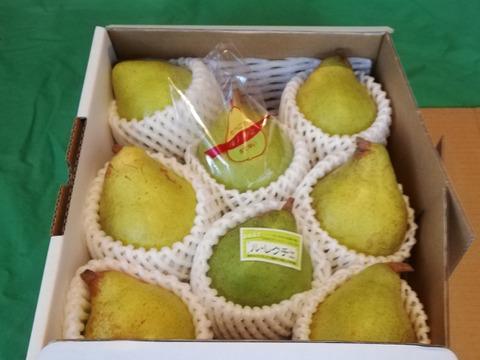 sahar様用 ルレクチェ、糖度16度以上、中玉サイズ、2キロ(6玉)×三箱+送料500円
