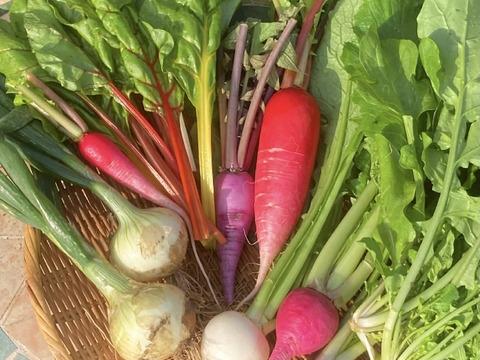 【お試し!7品目程度】カラフル!旬野菜!すずなり野菜セット( 簡単レシピ付き )