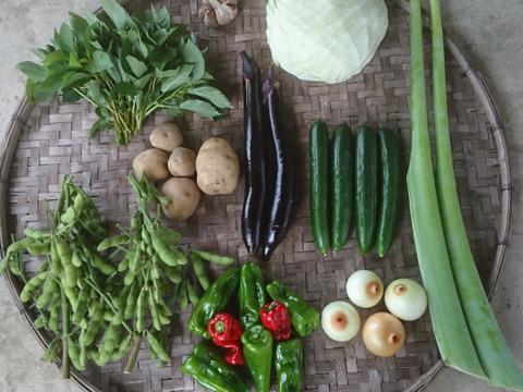 「有機JAS認証」旬の野菜セット Sサイズ 6~9品