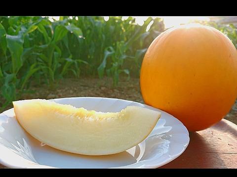 サクッと甘い!太陽のメロン イエローキング5玉【5kg】