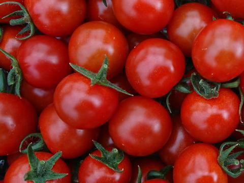 【620件突破に感謝を!】魔法の美味しさ!! 楽園トマトの定番 千果 1kg詰め合わせ