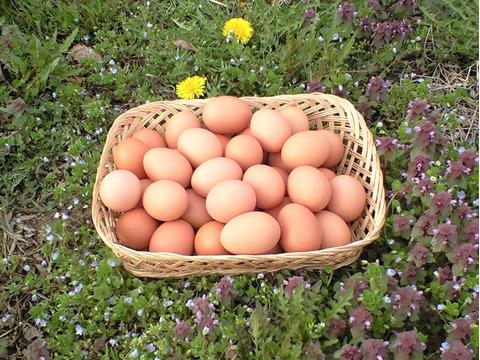 【平飼い卵】おぶせのたまご(60個)