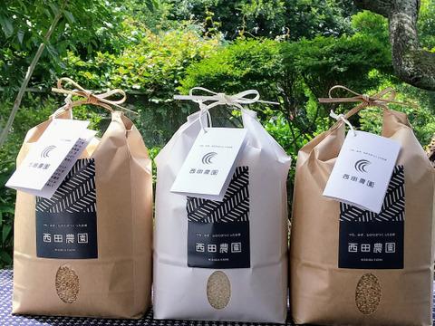 味比べ 特別栽培米コシヒカリ 玄米2kg&精米2㎏&玄米2kg  低農薬(80%以上削減)