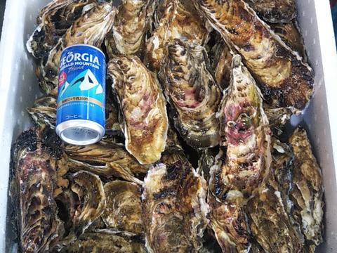 食べ放題向け バラ牡蠣 いっぱい7kg(40個くらい) 生食基準