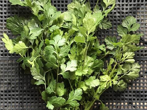 無農薬栽培のパクチー(香菜、コリアンダー)手頃な50g*βカロテン、ビタミンEがたっぷり
