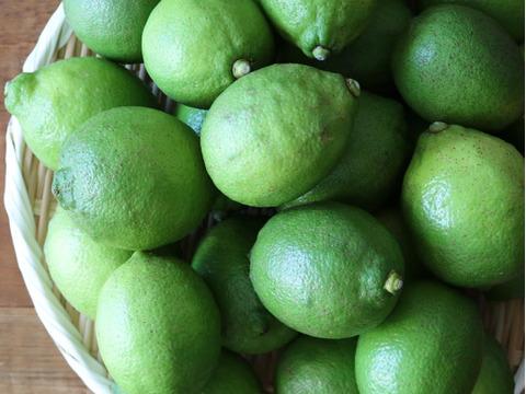 農薬不使用 瀬戸内グリーンレモン 1kg