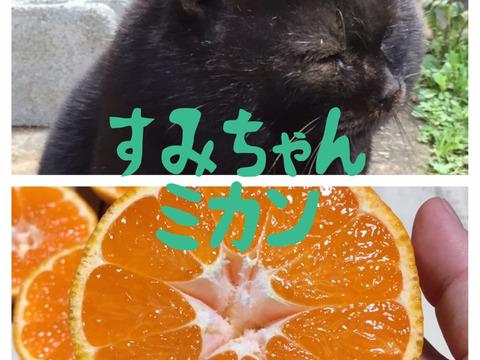 【完全無農薬】大きな青島みかん!2キロ