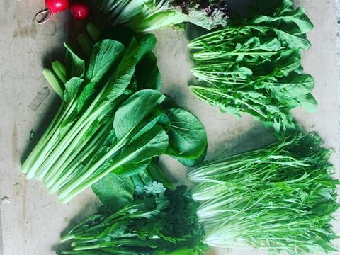 小さな農家、旬のお野菜セット 6〜8品目 【農薬・化学肥料・除草剤不使用】