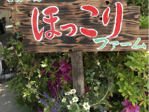 【淡路島より旬をお届け】お任せ野菜セットSサイズ