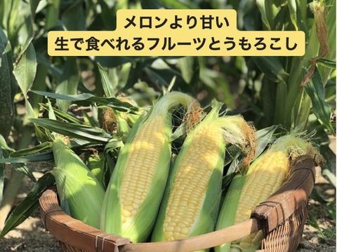 【たっぷり】メロンより甘い‼︎武ちゃん農場の朝採りとうもろこし(330g程度が12本)