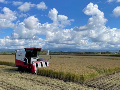北海道の良質米表彰者が作る少量栽培【ななつぼし】新米10㎏
