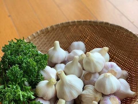 【数量限定】甘い、甘すぎる。 にんにく(バラ) 1㎏ ~栽培時、農薬・化学肥料・除草剤一切不使用~