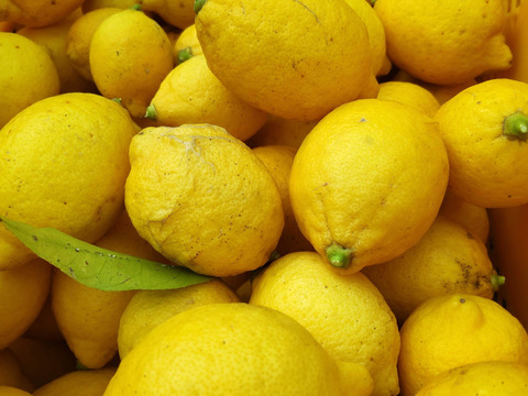 大崎上島産特別栽培レモン10kg