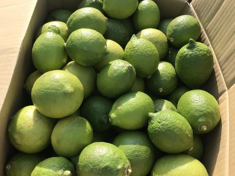 瀬戸内香りのよい青レモン  1kg Mサイズ以上