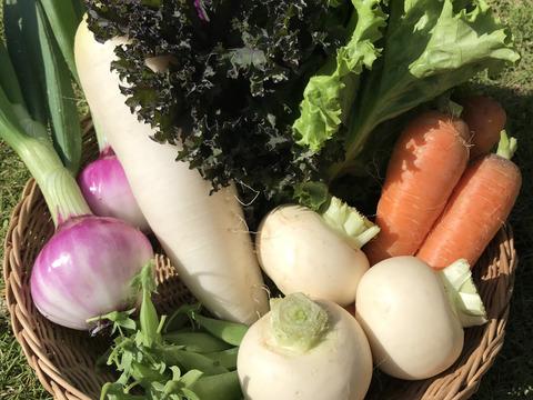 Sサイズ *旬野菜セット(約6~7品)【農薬:栽培期間中不使用】