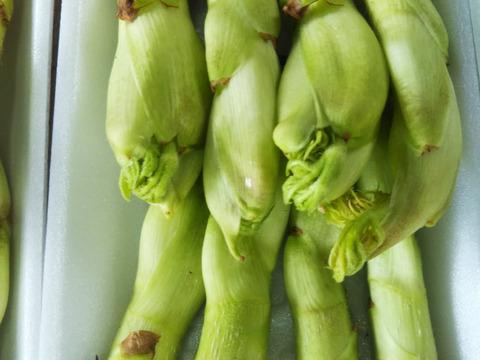 復活 少量お得セット【田舎満喫セット】世界農業遺産ブランド野菜 タラの芽、切干大根、金時豆