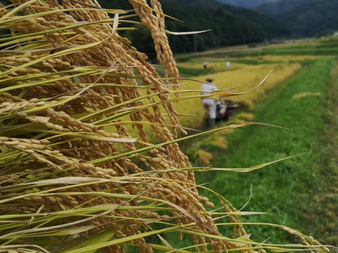 【令和3年産新米 玄米10㎏】一度は食べてほしい!昔ながらの天日干し棚田米 玄米  10㎏