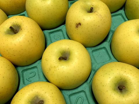 ~🍏青森りんごを直送🍏~『特別貯蔵完熟シナノゴールド』ご自宅用5Kg 13個から20個入り