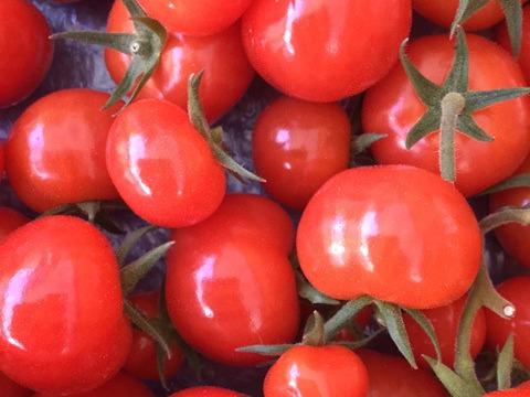 【クール便】そのままパクッと一口!皮が薄く、あま~いフルーツミニトマト(直近測定値12度超え)★ひめトマ★2kg