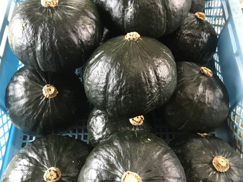 かぼちゃ: 高粉質で甘味があり、抜群に良い食味。