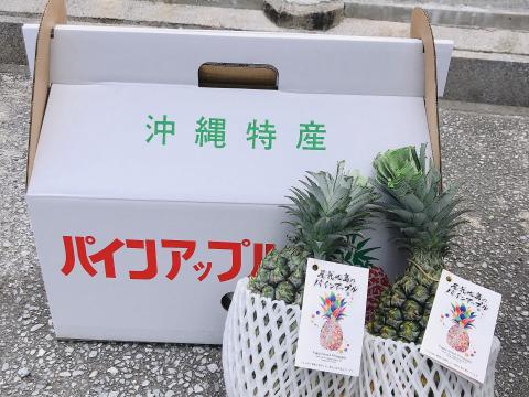 【7月販売予定】屋我地島の 完熟スナックパイン(2玉)(1玉1k〜1.3k) ふるさと納税返礼品✨【農薬節約栽培】 パインアップル
