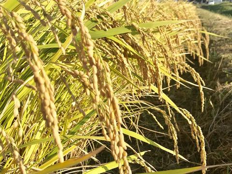 【令和2年度新米】淡路島産 ヒノヒカリ【精米2キロ玄米2キロ】詰合せ