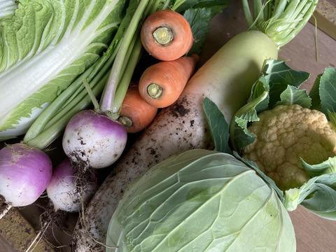 愛知発!今しかない‼︎旬の農薬化学肥料不使用野菜を5〜6種類詰めました!