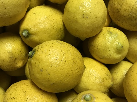農薬不使用 瀬戸内レモン 3kg