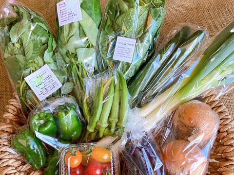 元氣な野菜*MEGLIY金沢の初夏野菜セット(8〜10品)【農薬不使用】
