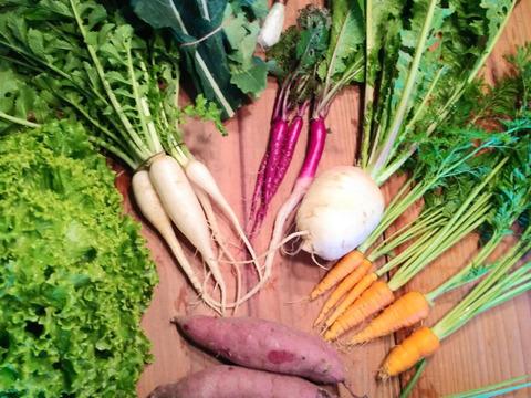 季節の自然栽培野菜セットMサイズ