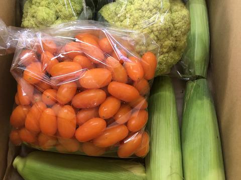 新発売!グリーンカリフラワーと秋のとうもろこし、黄色いミニトマトの3種セット‼︎
