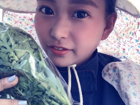 【千葉県産】綾善のお野菜セット お試し8品 60サイズ