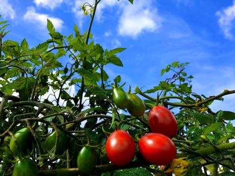 ✨世界農業遺産にし阿波✨ブランド認証品!!季節のお野菜セット[6種]♪(๑ᴖ◡ᴖ๑)♪