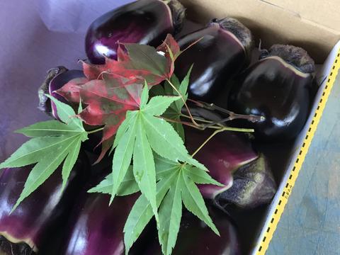 日本一のブランド茄子🍆 『りんごあめ🍎』 十全(新潟特産)と絹皮(大阪特産)の水茄子食べ比べセット 茄子漬けキッド