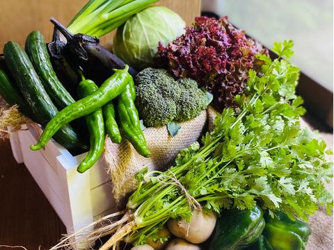 京都からパクチー1品+旬の野菜を詰め合わせ9品=10品目野菜セット