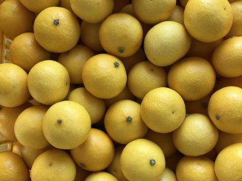 【希少】湘南ゴールド(ハウス)3kg Mサイズ(直径5.1~5.4cm)【幻のオレンジ】