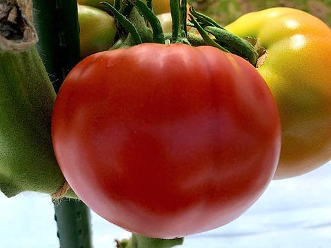 JAS認証 有機栽培 ベビーリーフ1kgとトマト3kgのセット
