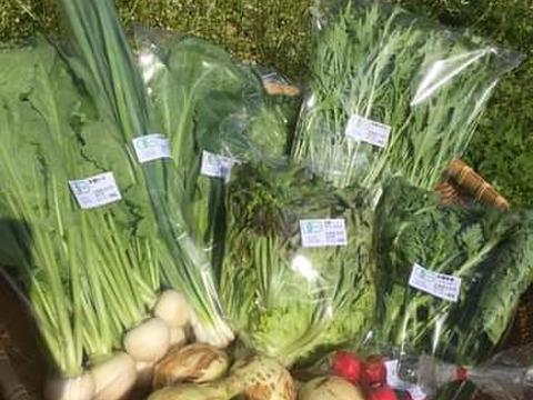 旬の野菜セット(有機、無農薬野菜 7~9品 クール便利用)